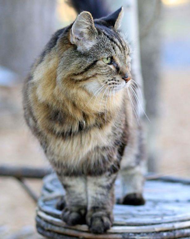 Chú mèo vẫn chạy nhảy, tắm nắng hàng ngày.
