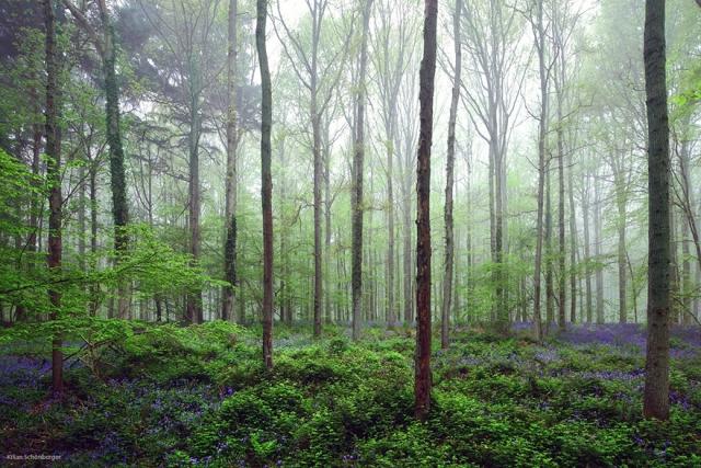 Hầu hết các cây ở đây đều là kết quả của việc trồng mới rừng diễn ra từ năm 1930 đến 1950.