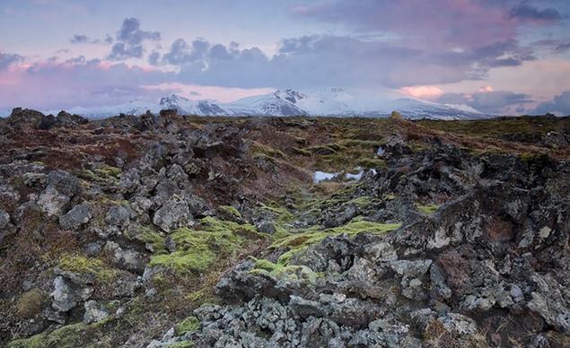 Cùng với núi lửa và băng giá là những cánh đồng rêu xanh và đá dung nham
