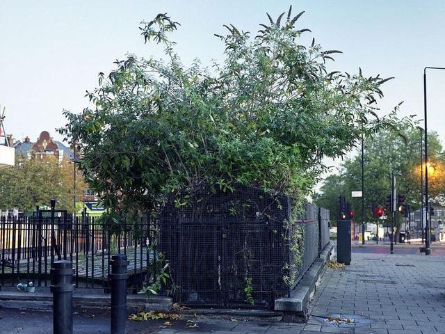 Nhà vệ sinh cũ ở Stamford Hill, phía bắc London với cây cỏ mọc um tùm.