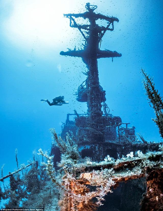 Thế giới hải dương đầy màu sắc phát triển xung quanh xác tàu