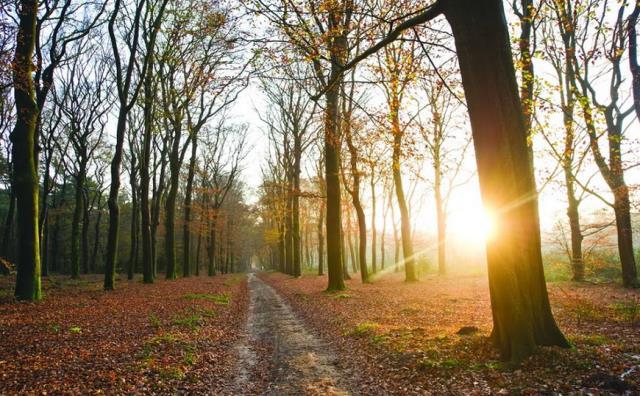 Những cánh rừng ở đây đẹp tuyệt vời vào mùa thu