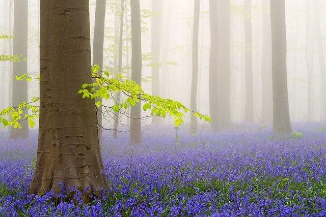 Lý do đầu tiên là vì nếu bạn đến quá sớm, hoa chỉ nở thưa thớt, còn quá muộn thì những bông hoa này sẽ tàn và trả lại cánh rừng như nó vốn có.
