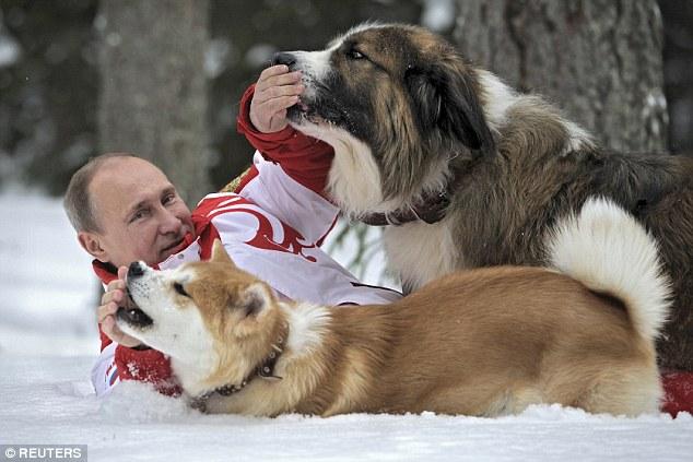 Hình ảnh ông Putin vui đùa cùng các chú chó cưng của mình tại Moscow năm 2013.