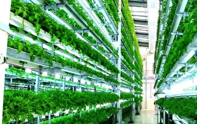 Mô hình trồng rau thẳng đứng Aerofarms. Ảnh: Robotics Business Review
