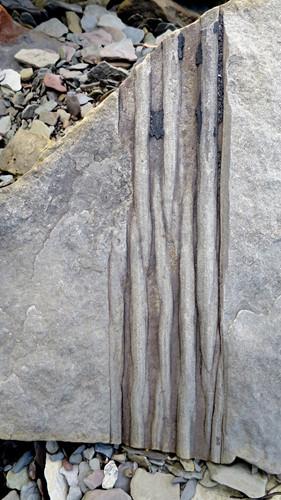 Những tảng đá ở vách đá Joggins còn lưu giữ chứng cứ các loài bò sát đầu tiên nhất trong lịch sử Trái đất và bảo tồn nguyên vẹn nhiều loài cây thẳng đứng đã hóa thạch. Ảnh: anotherwalkinthepark.