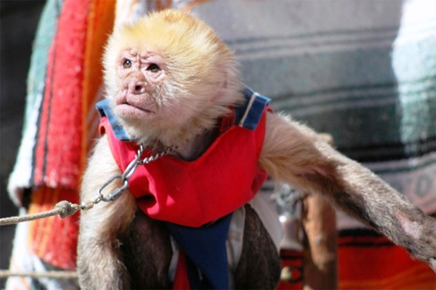 Du khách sẽ dế dàng bắt gặp các show biểu diễn của động vật tại nhiều sở thú.