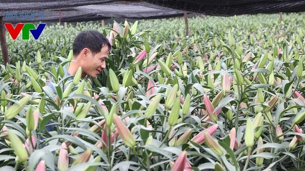 Làng hoa Tây Tựu có truyền thống trồng hoa lâu năm, các loại hoa được trồng chủ yếu là hoa ly, hoa hồng, hoa cúc, hoa đồng tiền..
