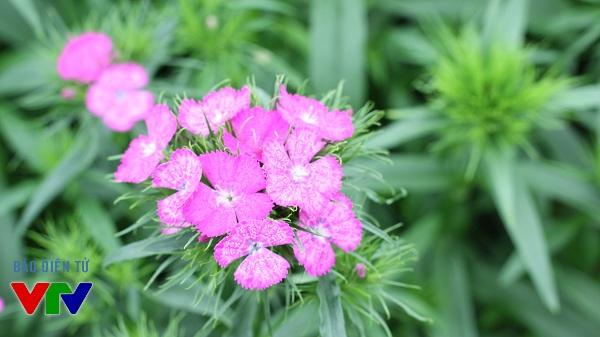 Là một trong những làng hoa lớn nhất Hà Nội, Tây Tựu cung ứng đa dạng các loại hoa cho người dân Thủ đô.