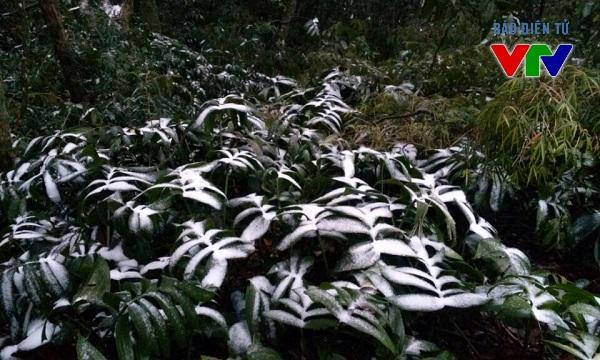 Băng tuyết xuất hiện trên diện rộng là cảnh tượng hiếm gặp tại Ba Vì, Hà Nội