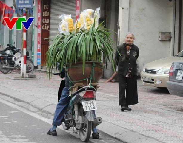 Dịp Tết năm nay, hoa lan Hồ Điệp rất được ưa chuộng để chơi Tết