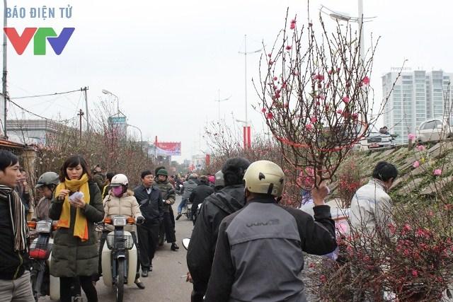 Tìm một cành đào đẹp, vừa ý tại chợ hoa Quảng Bá không hề khó