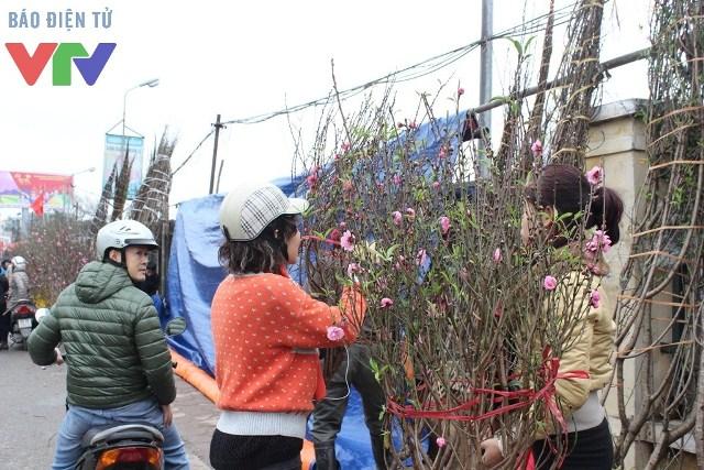 Đào đẹp và giá cả phải chăng nên rất đông người tìm đến chợ Quảng Bá mua đào
