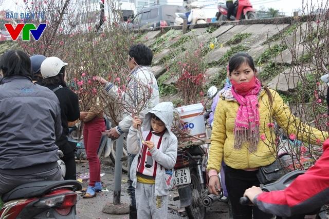 Chợ hoa Quảng Bá luôn là điểm đến lí tưởng cho những người dân muốn tìm một cành đào đẹp, giá phải chăng