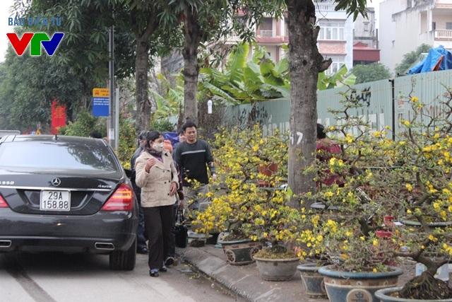Người dân Hà Nội cũng có thể chọn cành mai vàng trên đường Lạc Long Quân đã trổ hoa khoe sắc để trưng Tết