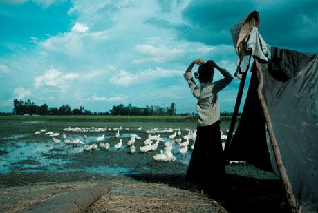 Một miền quê Việt Nam, 1989