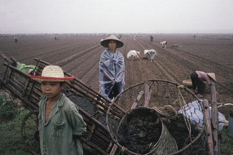 Hà Nội, 1989: Trên những cánh đồng ven đô