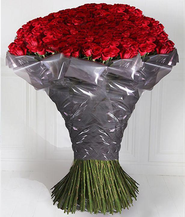 1.000 bông hồng đáng giá một chuyến du thuyền hạng sang vòng quanh thế giới