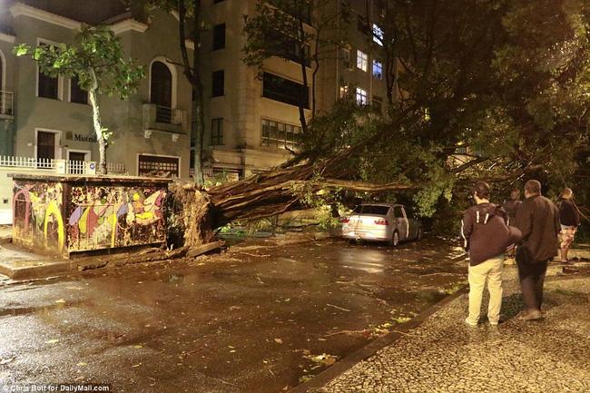 Mưa bão rất lớn, bằng chứng là hình ảnh một cái cây bị quật đổ bên ngoài đường phố cạnh sân Maracana.