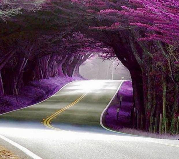 Con đường xuyên qua hàng cây ở Azerbaijan