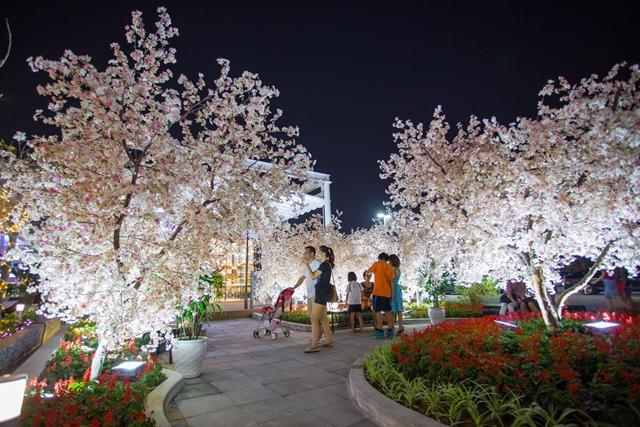 Hàng cây hoa anh đào nở rộ sắc hồng cũng là địa điểm không thể bỏ qua cho các cặp đôi ưa thích sự lãng mạn, dịu dàng