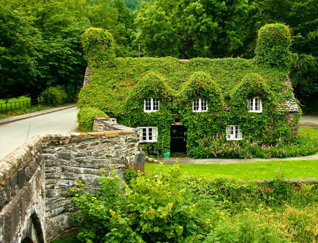 Màu xanh cỏ cây phủ lên căn nhà, các lối đi, mái ngói chỉ chừa ra những ô cửa sổ màu trắng ở phía bắc xứ Wales
