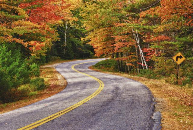Bạn sẽ không bao giờ cảm thấy mệt mỏi khi lái xe qua những con đường ngập sắc lá vàng như thế này