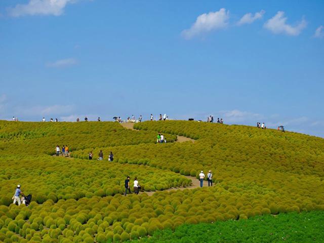 Những cây xanh mơn mởn ở công viên tỉnh Ibaraki (Nhật Bản) thu hút rất nhiều du khách tham quan vào mùa hè