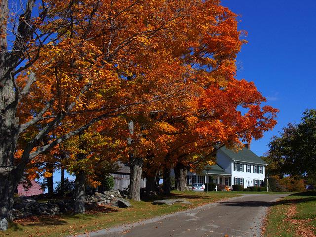 Khung cảnh này bạn sẽ thấy ở tất cả mọi nơi, mọi ngõ ngách của vùng New England xinh đẹp