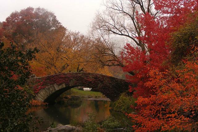 Cây cầu ở Mỹ giống hệt một bức tranh phong cảnh theo trường phái ấn tượng khi thu về