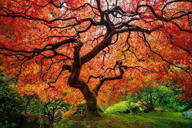 Và sừng sững như một tác phẩm nghệ thuật khi vào mùa thay lá