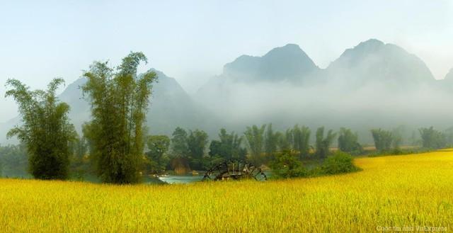 Mùa vàng bên sông Quây Sơn (Trùng Khánh, Cao Bằng)