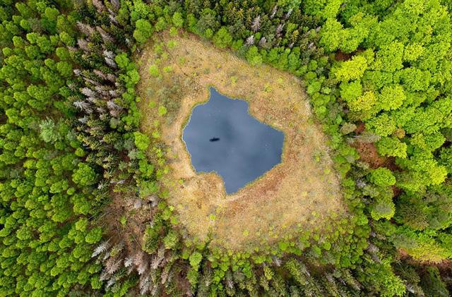 Hồ giữa rừng ở Ba Lan với những tán cây xanh mơn mởn