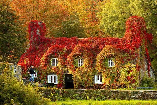 Căn nhà xanh mướt màu cây cỏ từ hè dần đỏ ửng khi thu đến. Rừng cây phía sau cũng dần chuyển sắc làm nền tuyệt đẹp cho căn nhà với kiến trúc cổ nổi bật.