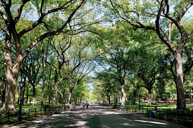 Công viên trung tâm ở New York một ngày nắng đẹp với những vòm cây xanh hàng chục năm tuổi