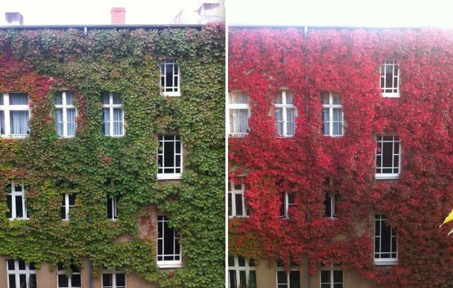 Mặt tiền một căn hộ chung cư thay áo đỏ nổi bật khi thu đến