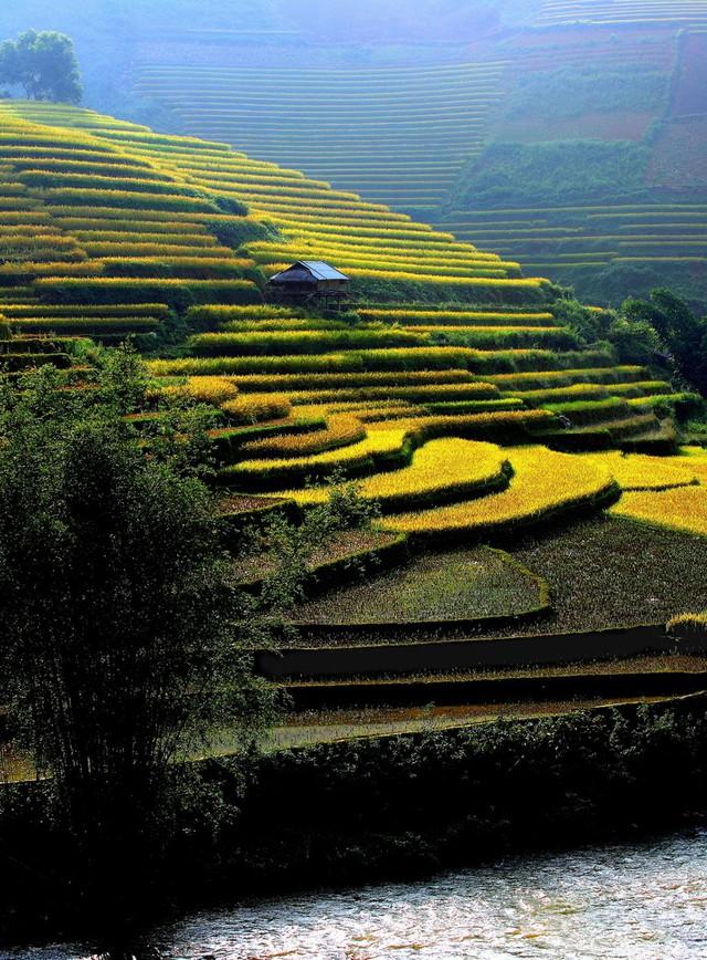 Hương lúa Mù Cang Chải (Yên Bái)