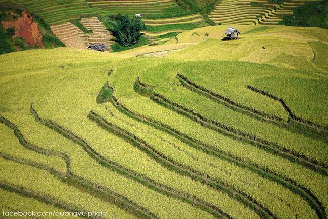 Những bức ảnh này được chụp tại xã Chế Cu Nha, quanh thị trấn Mù Cang Chải, dọc bên đường quốc lộ từ Tú Lệ lên thị trấn.