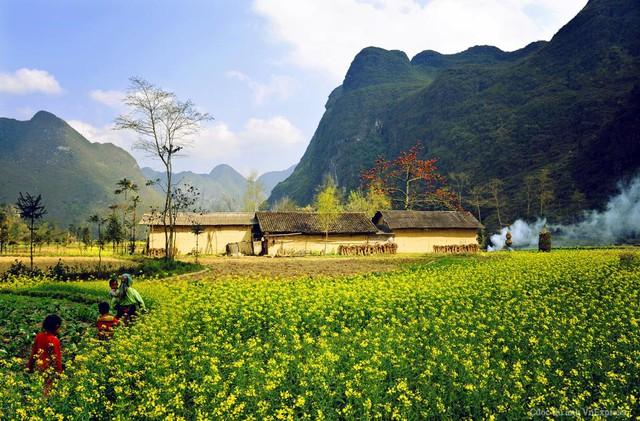 Phố Cáo (Hà Giang) mùa hoa cải