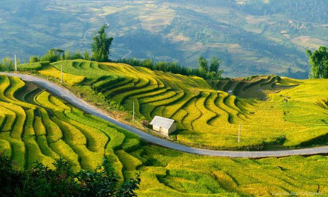 Y Tý (Lào Cai) và những con đường mùa vàng