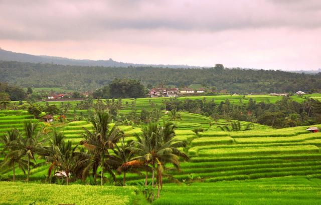 Ubud là một thị trấn trên đảo Bali, Indonesia. Thị trấn này nằm giữa những cánh đồng lúa và khe núi dốc đứng ở chân đồi trung tâm của huyện Gianyar. Ngành du lịch của Ubud tập trung vào yoga, văn hóa và thiên nhiên.