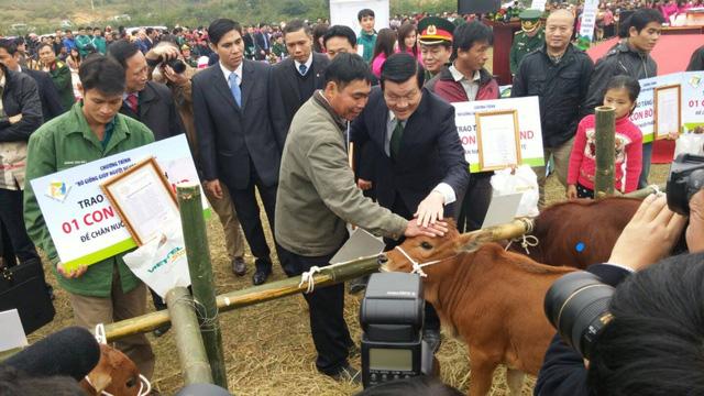 Chủ tịch nước trao bò tận tay người dân. (Ảnh: BTC)