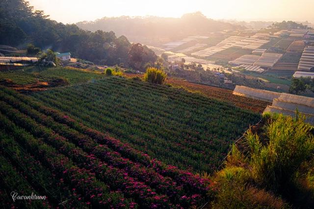 Chính nhờ sự thuận lợi đó mà nơi đây còn được mệnh danh là thiên đường của các loại hoa, các loại rau quả tươi bốn mùa và những khu rừng thông xanh mát.
