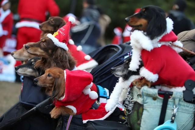 Những chú chó dễ thương cũng tham gia vào một cuộc chạy bộ từ thiện ở Công viên Kasai Rinkai, Tokyo, Nhật Bản. (Nguồn AP)