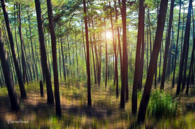 ...hay tìm tới những khu rừng thông mát mẻ để nghỉ chân. Những khu rừng này không chỉ làm thanh sạch bầu không khí của thành phố mà còn tăng thêm phần sinh động và hấp dẫn cho các cảnh quan thiên nhiên.