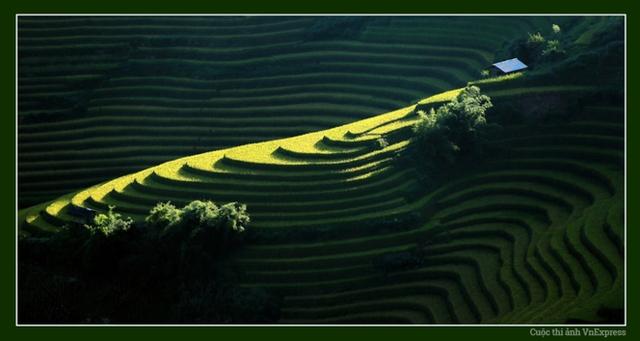 Mỗi vùng miền trên đất nước Việt Nam lại có một vẻ đẹp riêng, nếu miền Nam là hình ảnh của những miệt vườn trĩu quả, miền Trung là những bãi biển đẹp hút hồn thì miền Bắc lại rực rỡ với những mảng màu xanh của lúa đương thì. (Tác giả:Trịnh Việt Hùng)