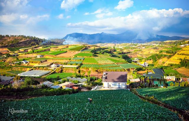 Bạn có thể tham quan những vườn rau hay hoa của nông dân, mua một chút về làm quà cho gia đình và bè bạn...