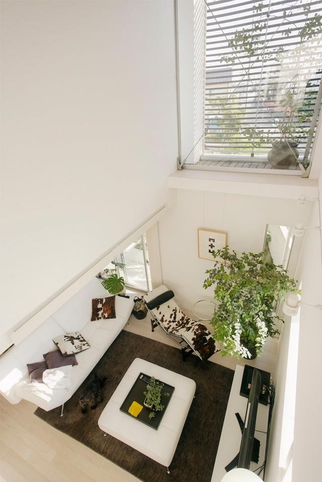 Phòng khách với những chậu cây xanh mát nhìn từ tầng hai của căn nhà