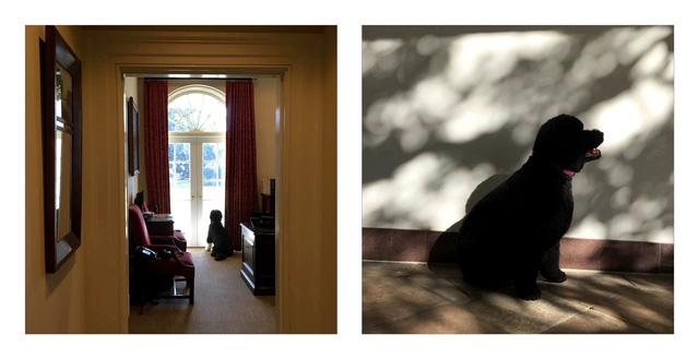 Bo (trái) ở ngoài phòng Bầu dục và Sunny (phải) ở hành lang