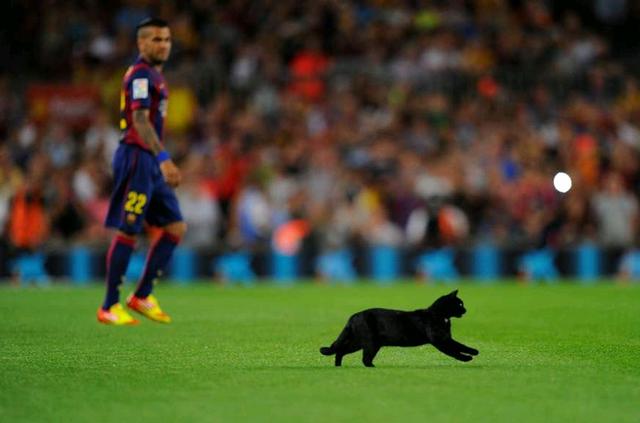 Thầy trò Luis Enrique mở màn La Liga 2014/15 với chiến thắng ngọt ngào 3-0 trước Elche trên sân nhà Camp Nou. Sao trẻ Munir El Haddadi lập cú đúp còn Messi đóng góp 1 bàn.